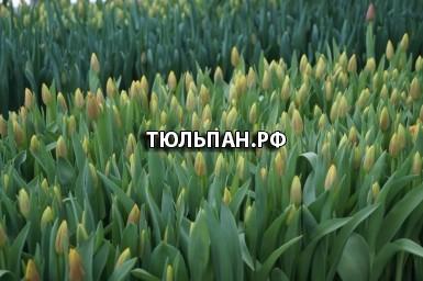 ed667879